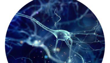 Webinar: Latin American and Caribbean Consortium on Dementia (LAC-CD) Research Updates